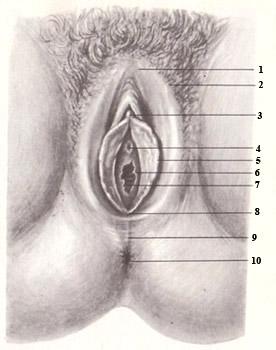 наглядное видео женских половых органов меня